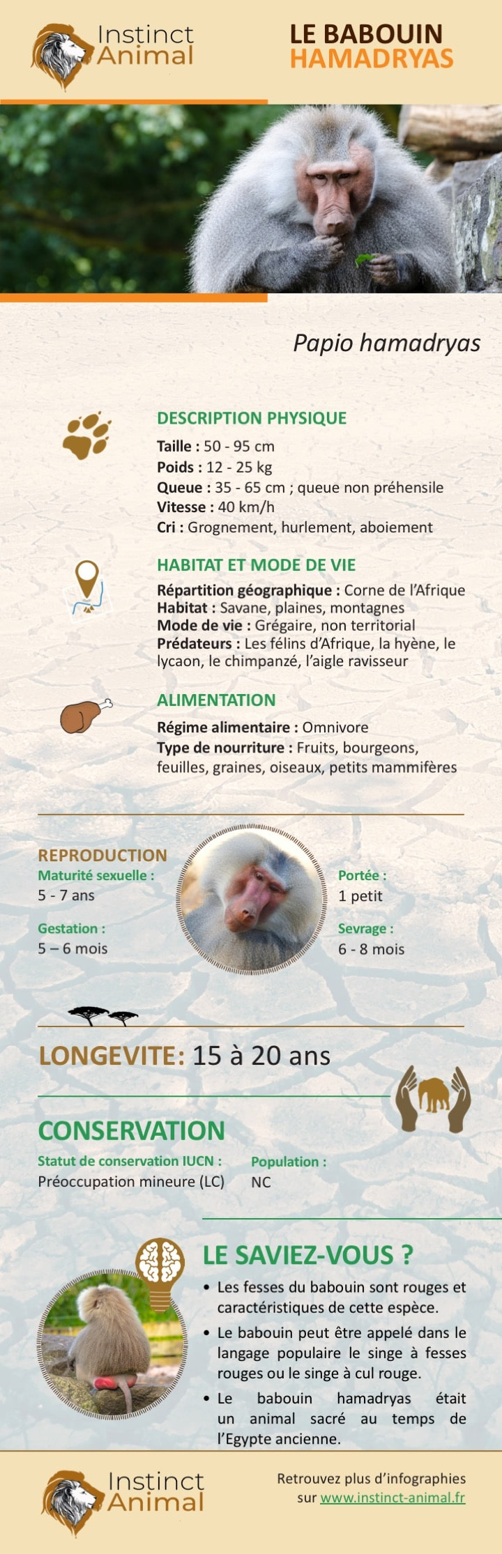 Description du babouin hamadryas - Instinct Animal