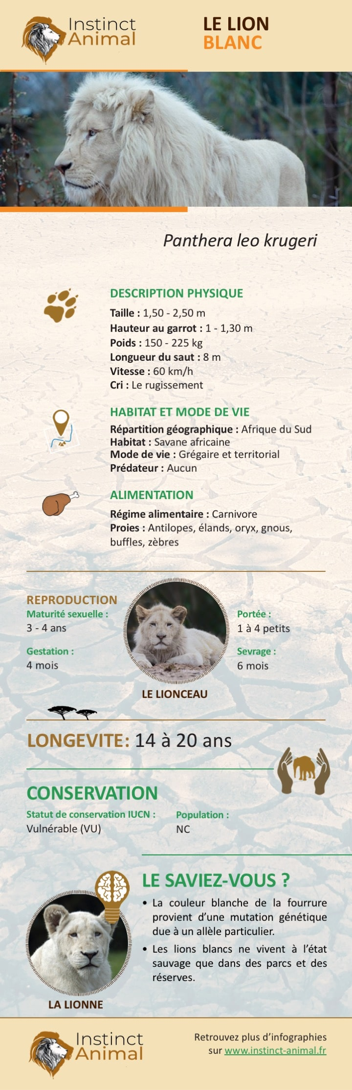 Le lion blanc - Infographie - Instinct Animal